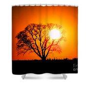 Mighty Oak Sunset Shower Curtain
