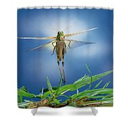 Migratory Locust Flying Shower Curtain