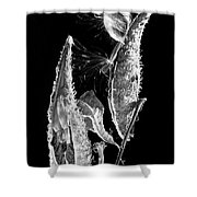 Milk Weed Duo Shower Curtain