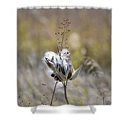 Milk Weed Seed Shower Curtain