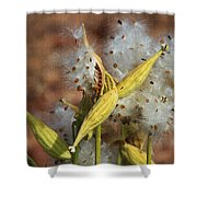 Milk Weed Spewing Its Seeds Shower Curtain