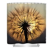 Beauty Of The Dandelion 2 Shower Curtain