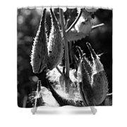 Milkweed #10 Shower Curtain