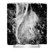 Milkweed #14 Shower Curtain