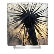Beauty Of The Dandelion 1 Shower Curtain