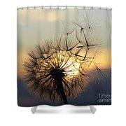Milkweed 5 Shower Curtain