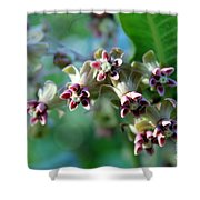 Milkweed Bloom Shower Curtain