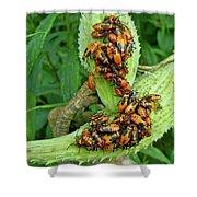 Milkweed Bug Nymphs - Oncopeltus Fasciatus Shower Curtain