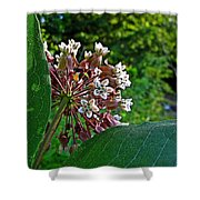Milkweed Flowers And Leaves Shower Curtain