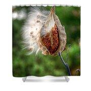 Milkweed  Shower Curtain