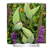 Milkweed Pods Shower Curtain