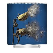 Milkweed Pods On A Blue Background  Shower Curtain
