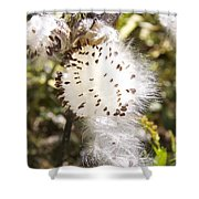 Milkweed Seeds 3 Shower Curtain