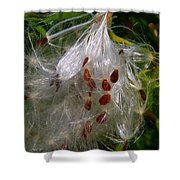 Milkweed Seeds Shower Curtain