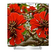 Milkwood Tree Blossoms In Donkin Reserve In Port Elizabeth-south Africa Shower Curtain