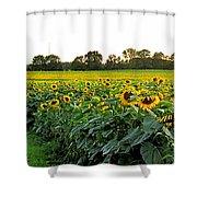 Millions Of Sunflowers Shower Curtain by Danielle  Parent