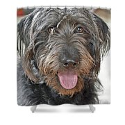 Milo Shower Curtain by Lisa Phillips