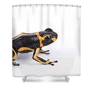 Mimic Poison Dart Frog Shower Curtain