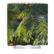 Mimosa At Sunset Shower Curtain