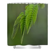 Mimosa Fronds In Spring Shower Curtain