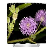 Mimosa Pudica  Shower Curtain