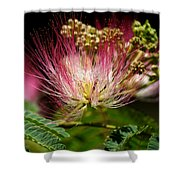 Mimosa- The Beautiful Bloom Shower Curtain