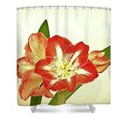 Minerva 2 Shower Curtain