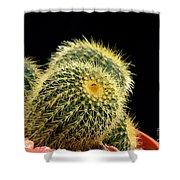 Mini Cactus In A Pot Shower Curtain
