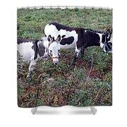 Mini Donkeys Shower Curtain