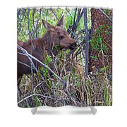 Mini Moose Shower Curtain