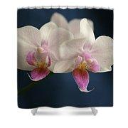 Mini Orchids 2 Shower Curtain