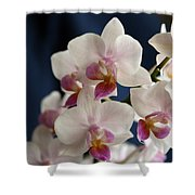 Mini Orchids 3 Shower Curtain