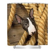 Miniature Bull Terrier Puppy Shower Curtain