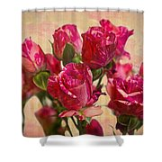 Miniature Roses Shower Curtain
