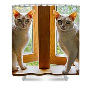 Mirrored Cats Shower Curtain