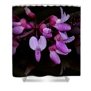 Mirrored Redbuds Shower Curtain