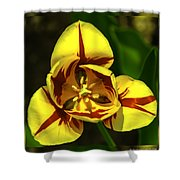 Mirrored Tulip Time Shower Curtain