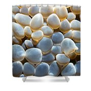 Miscellaneous 1 Shower Curtain