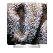 Miscellaneous 4 Shower Curtain