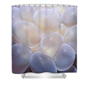 Miscellaneous 6 Shower Curtain