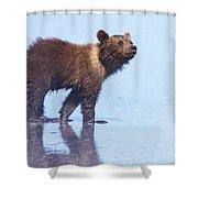 Mischief Shower Curtain