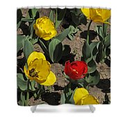 Misplaced Tulip   #0934 Shower Curtain