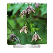 Mission Bells  Fritillaria  Grow Shower Curtain