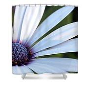 Mission Flower 4480 Shower Curtain