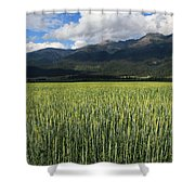 Mission Valley Wheat Shower Curtain