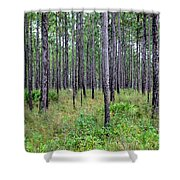 Mississippi Woods Shower Curtain