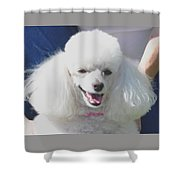 Missy White Poodle Shower Curtain