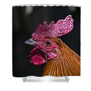 Mister Rooster Shower Curtain