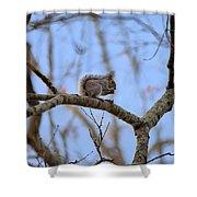 Mister Squirrel Shower Curtain
