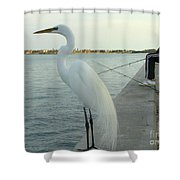 Mister When Are We Going To Have Catch Of The Day Shower Curtain